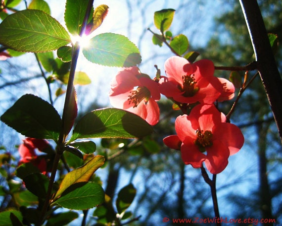 Red Flowers Photography - Blue Skies Photo- The Sun Garden Nature Flora - Fine Art Photography 8x10