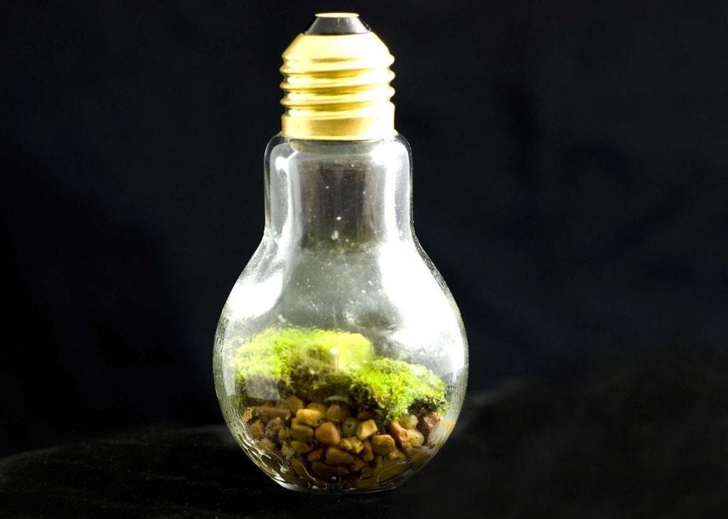 THINK GREEN Lightbulb Moss Terrarium