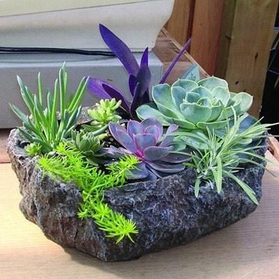 Succulent Garden Kit Rock Planter Includes by SucculentDESIGNS