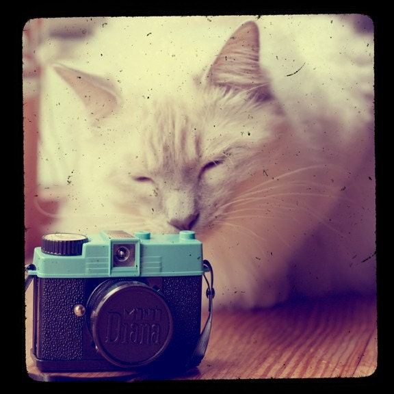 diana mini kitty 5x5 ttv photo print - free shipping