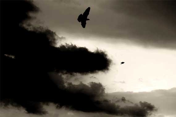 INSTANT DOWNLOAD - Nature photography, sky photography, black and white sky -black clouds and birds photo - Photonshop