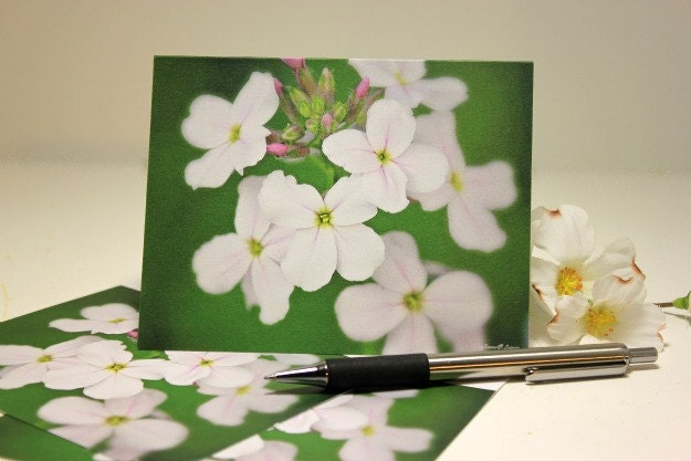 Dear Mother - photo note cards, spring phlox, floral, nature photography, cream and green, fresh finds, blank notes, set of 4