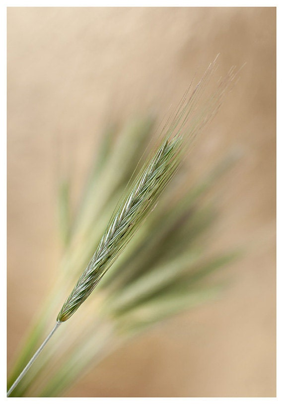 Fine Art Print, rye photography, nature photo prints, wall art, wall decor, home decor - IonAnthosPhotography
