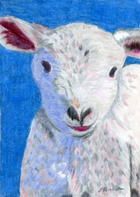Cuddly Lamb Colored Pencil painting reproduction 5 x 7 Cute Sheep