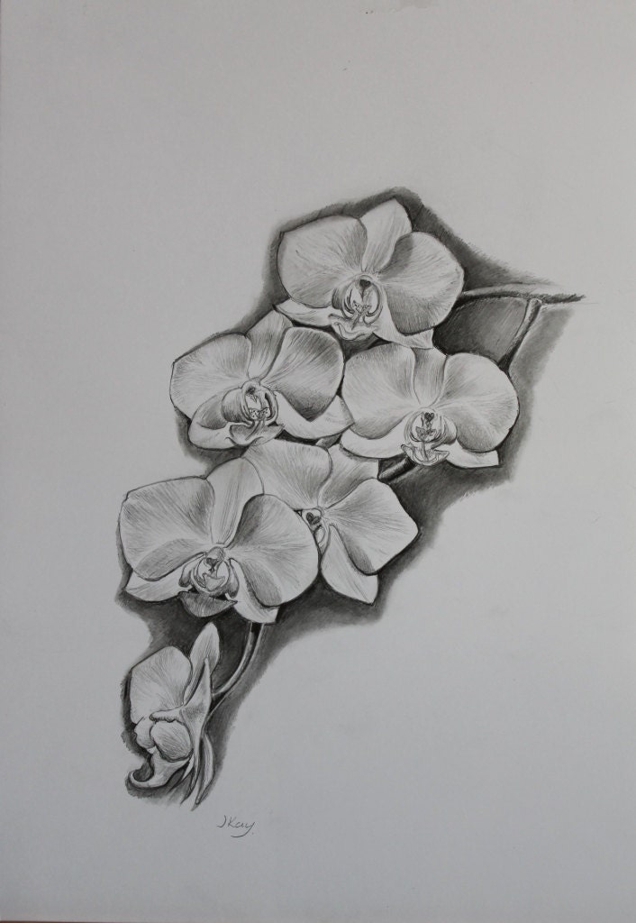 White Orchid - Original Pencil Drawing by Jane Kay- Mothers Day Gift ...