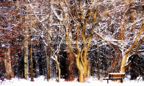 Winter Forest Photo Snow Covered Trees and Bench White Brown Rustic Fine Art Photography - ShawnelizaCreations