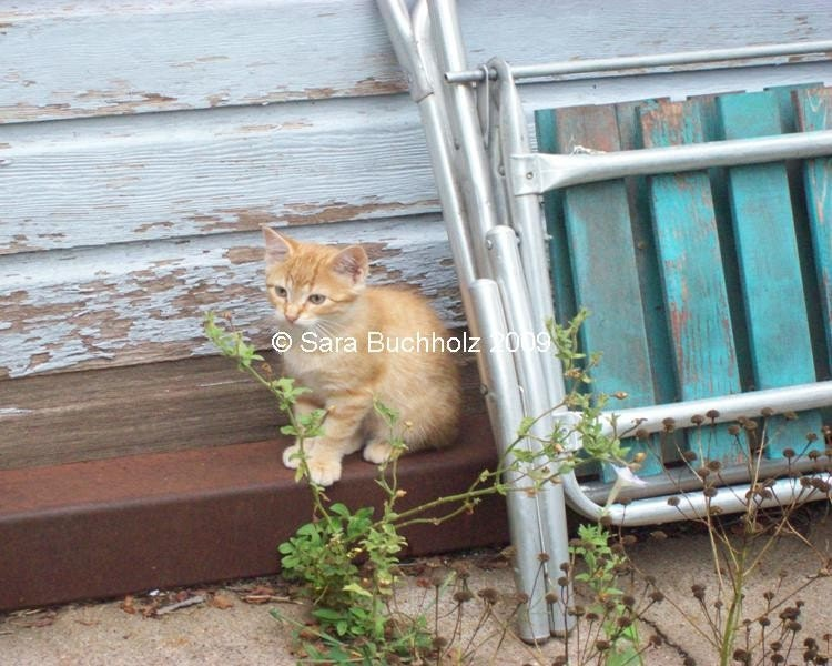 The Lonely Kitten 5x7 Photograph
