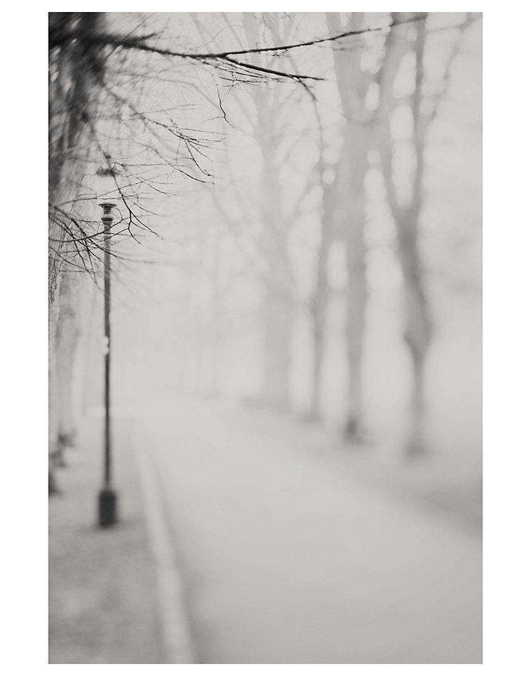 path road trees landscape black and white photo print - whimsical fine art nature photography, enchanting, dream, street, lamp, cambridge - sweetdreamsandhoney
