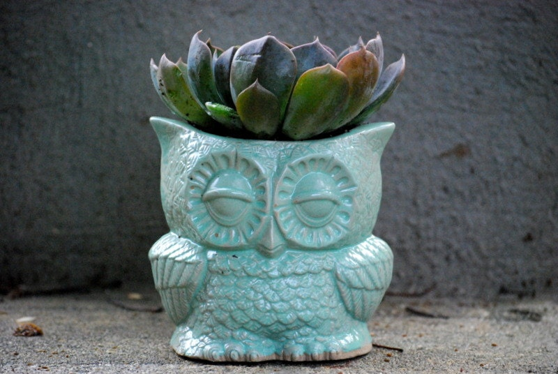 why not plant in unique looking pots and vases
