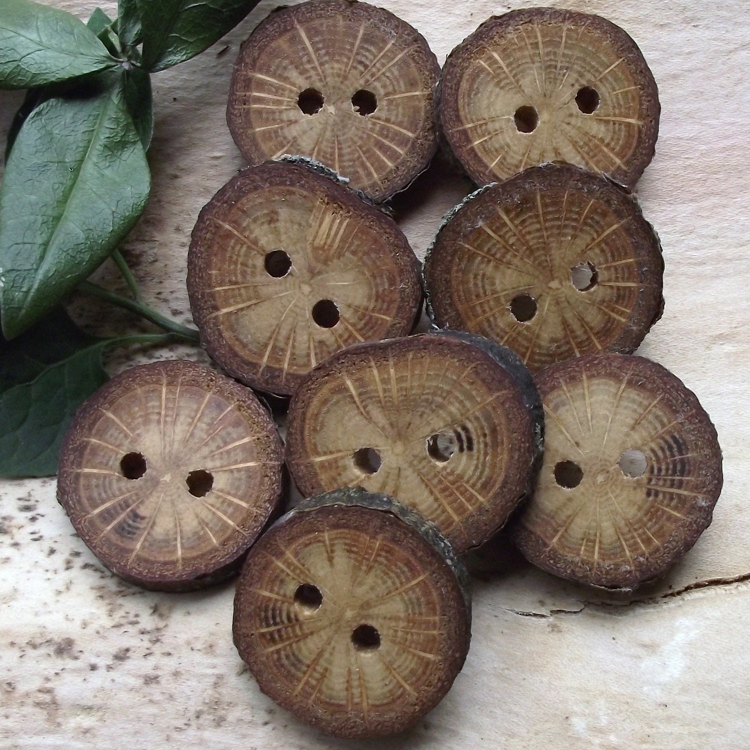 Small Wood Buttons - 8 Ohio Oak Wooden Tree Branch Buttons with Bark - 1 1/4 inches, 2 Holes, For Knitting, Journals, Pillows, Purses