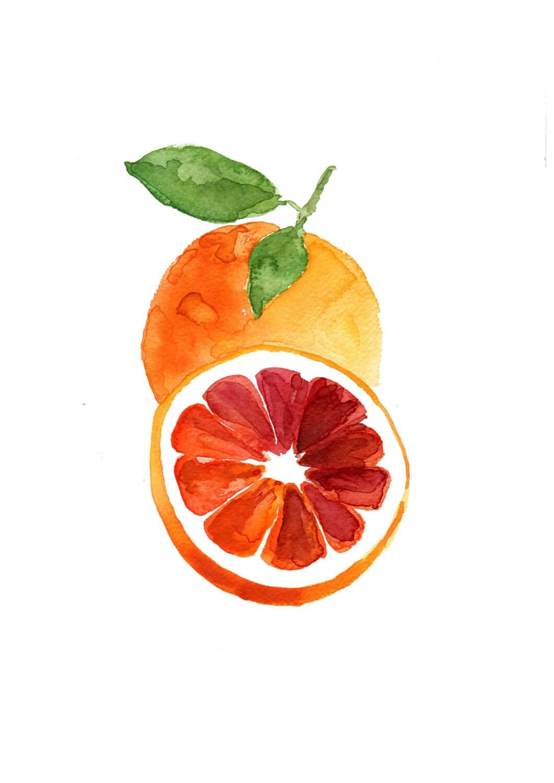 Blood orange study number three art print of watercolor ...