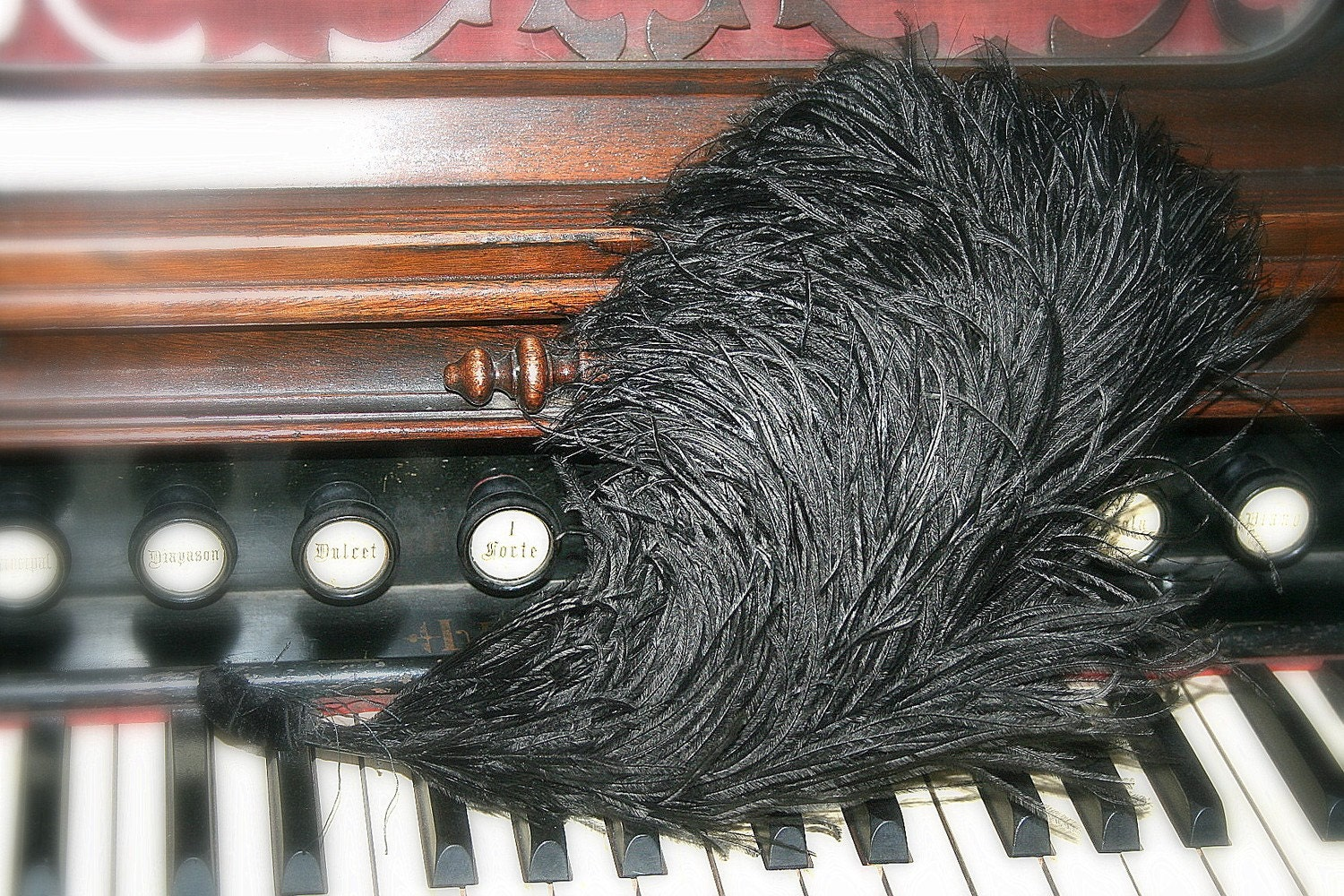 a black flouncy edwardian ostrich feather