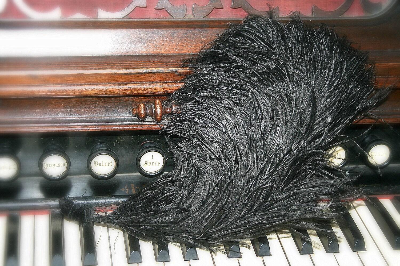 a black flouncy edwardian ostrich feather