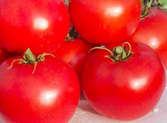 Wisconsin 55 tomato CERTIFIED ORGANIC seed 1 packet (25 seeds) - PrairieRoadOrganic