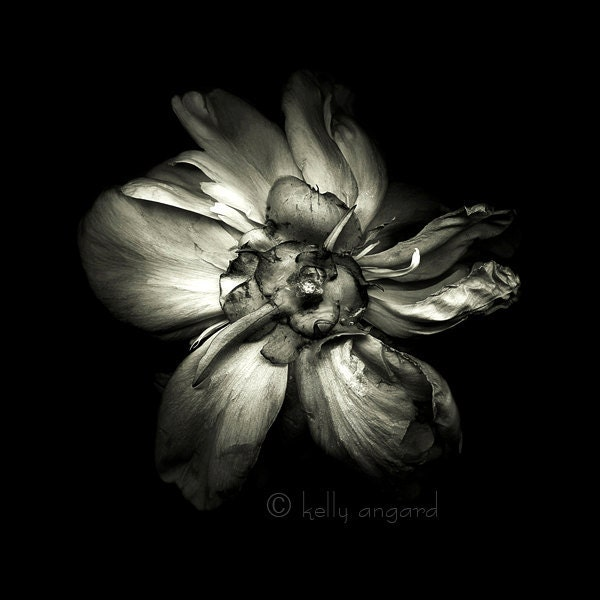 botannica obscura 4...botanical fine art photography by kelly angard - kellya