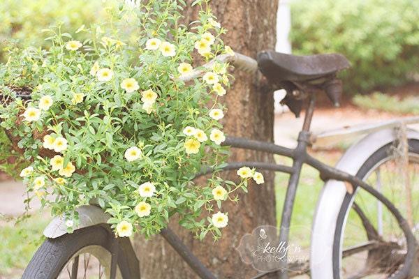 Summer Bike- Summer Photograph- Bike Photography- Flower Basket- Vintage Bicycle- Nostalgia- 8x12 Fine Art Print - kellynphotography
