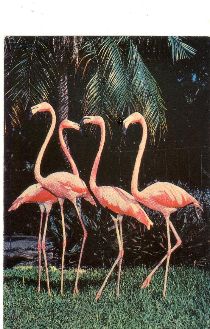 Vintage Florida Postcard Miami Pink By Savannahsmiles4u On