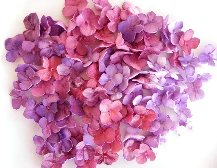 25 Sugar Hydrangea Singles - Any Color