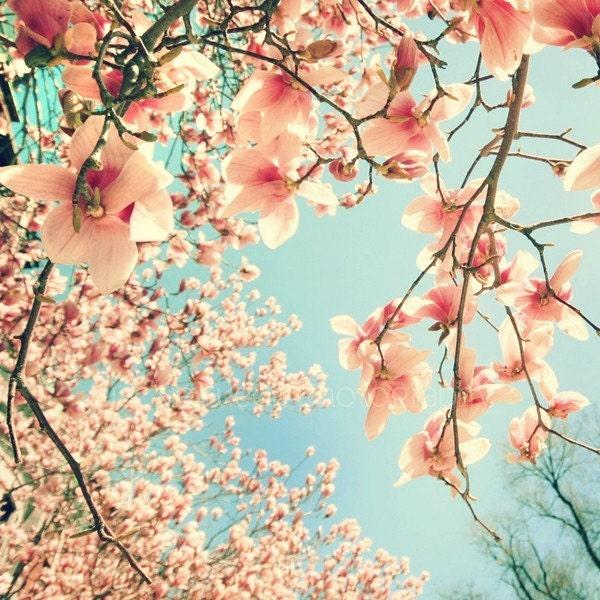Magnolia 5 x 5 Fine Art Photograph