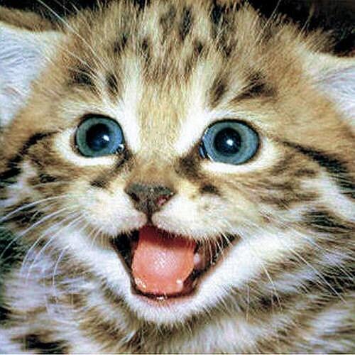 Happy Kitten 5 x 5 Photography Print