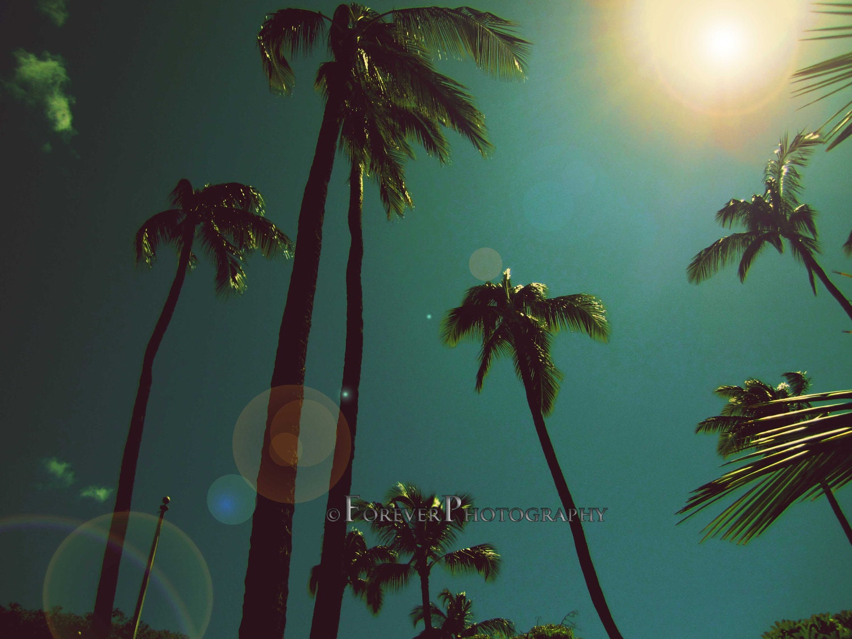 Hawaiian Palm Tree Fine Art Christmas By Foreverphoto On Etsy