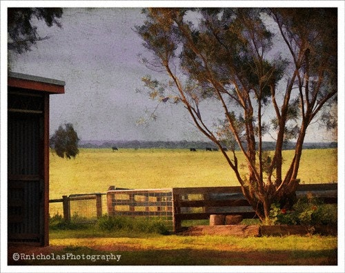 16x20 - rustic wall art - Australian art print - native gum trees - sunny paddock - Aussie farm - Afternoon Sunset - fine art photograph - RuthNicholas