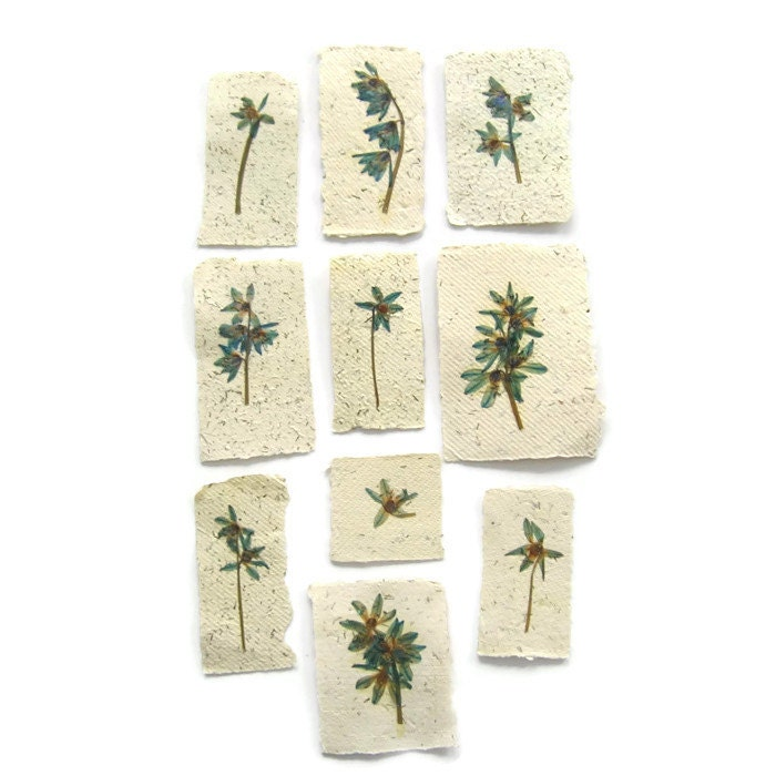 Pressed flowers on handmade paper for your craft by pulpart for Handmade paper craft ideas