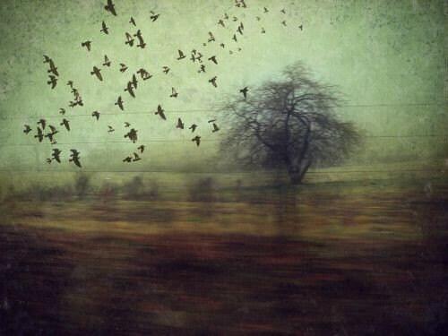 Photo Photograph -  riding shotgun - 8x10 fine art PHOTOGRAPHY - Nature Trees Flying Flock of Birds - MaudesMisfitFactory
