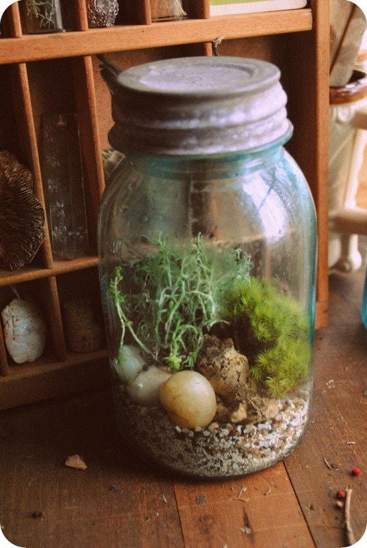 Vintage Blue Mason Jar Terrarium