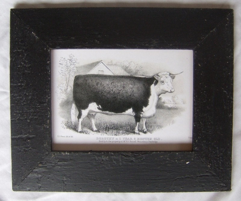 Farm Animal Pictures To Print. Farm Animal Cow Print Reclaimed Print Wood Frame SCP1 The frame is made from Authentic house materials, salvaged from an early house in Upstate NY.