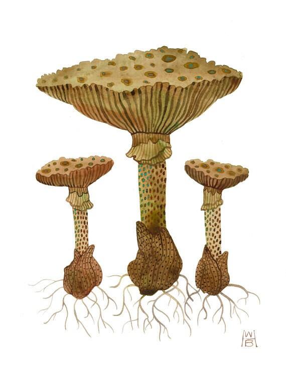Fungi No. 3  original watercolor painting