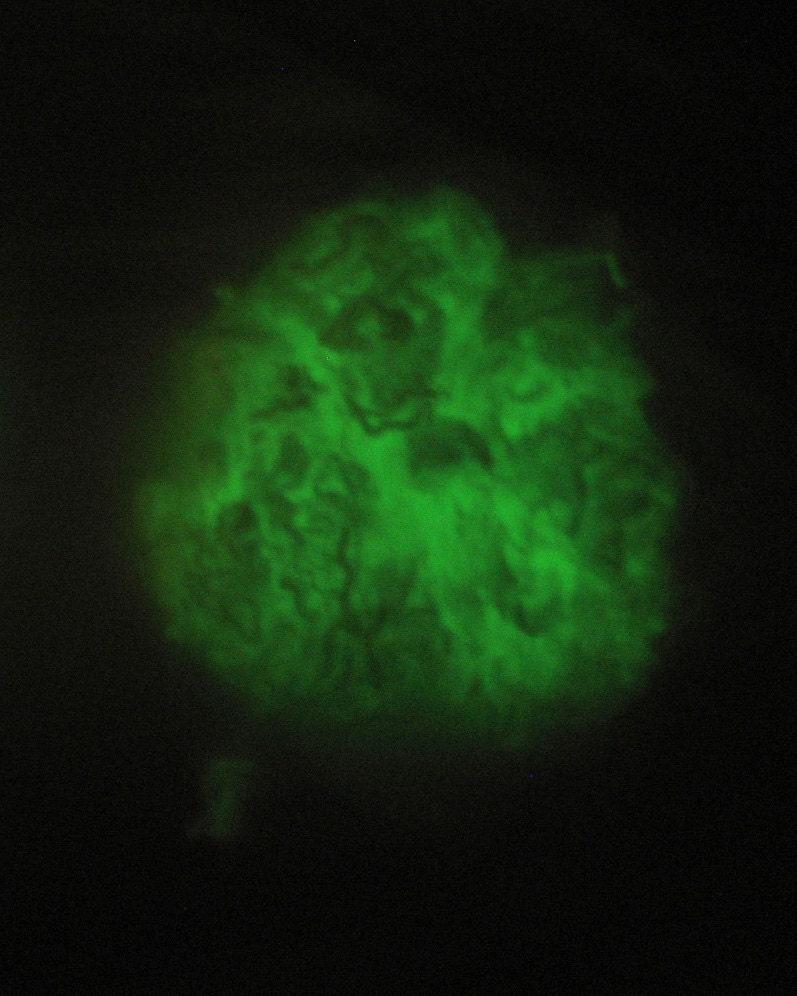 Glow in the Dark Spinning Fiber - Blending Felting Fiber - 6 denier - white fiber - green glow - 1 oz. (28g) - Zauberzeug
