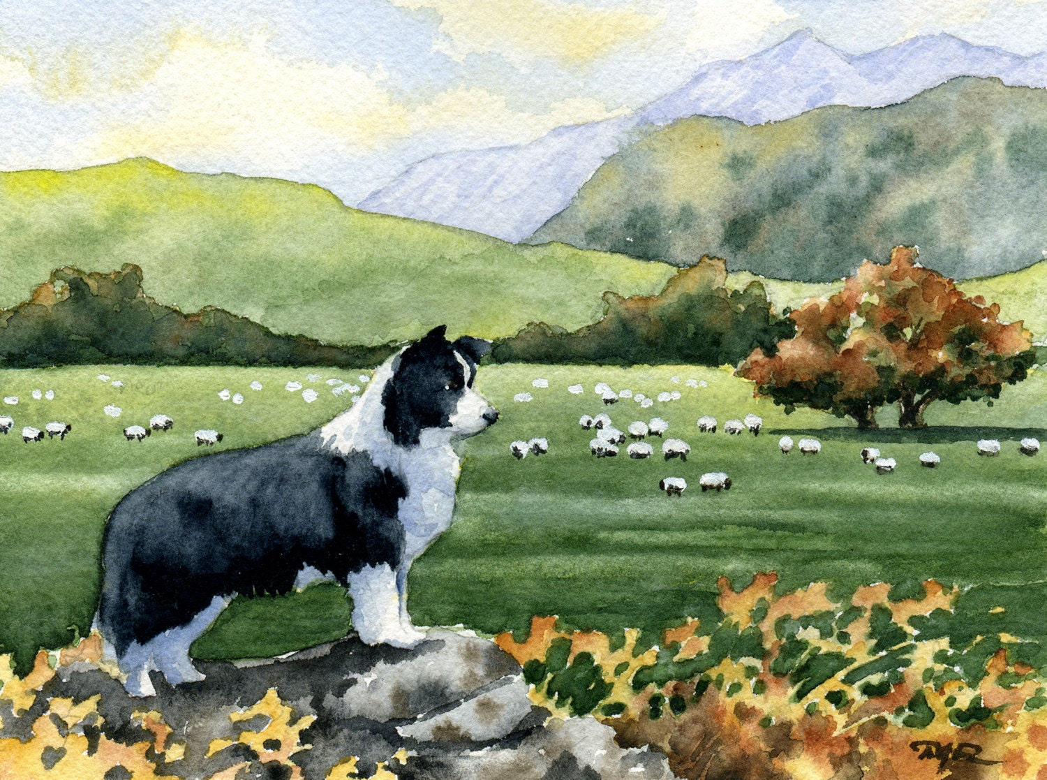 Border Collie Dog Signed Watercolor Fine Art Print By