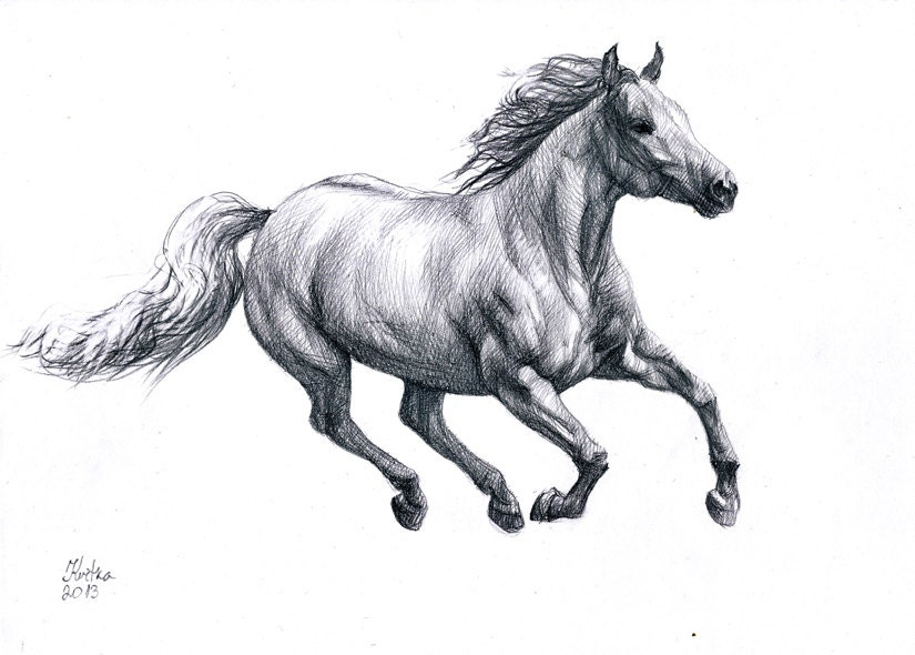 Realistic Horse Running Drawings