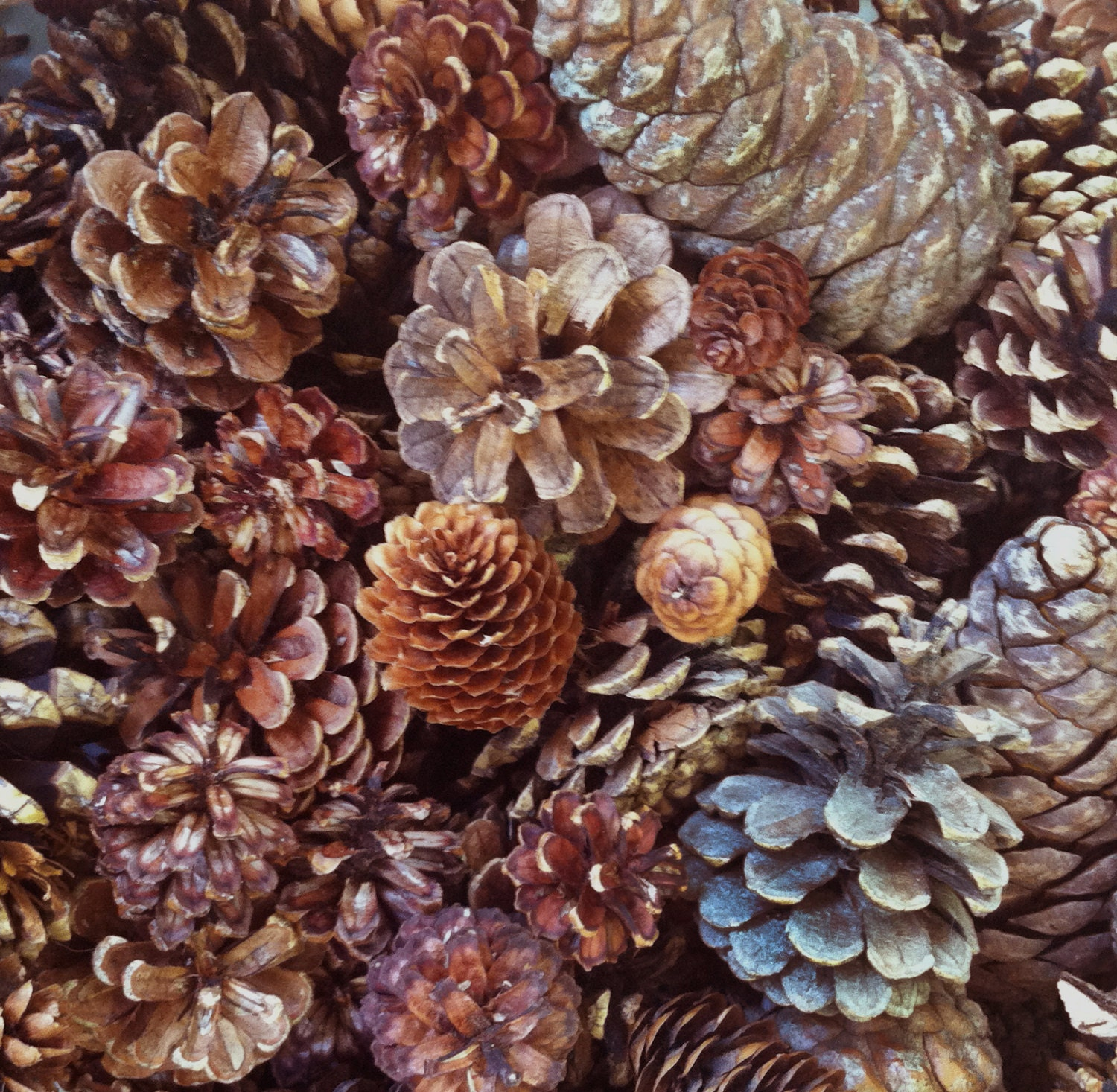 150 assorted pine cones spruce cones small medium for for Small pine cone crafts