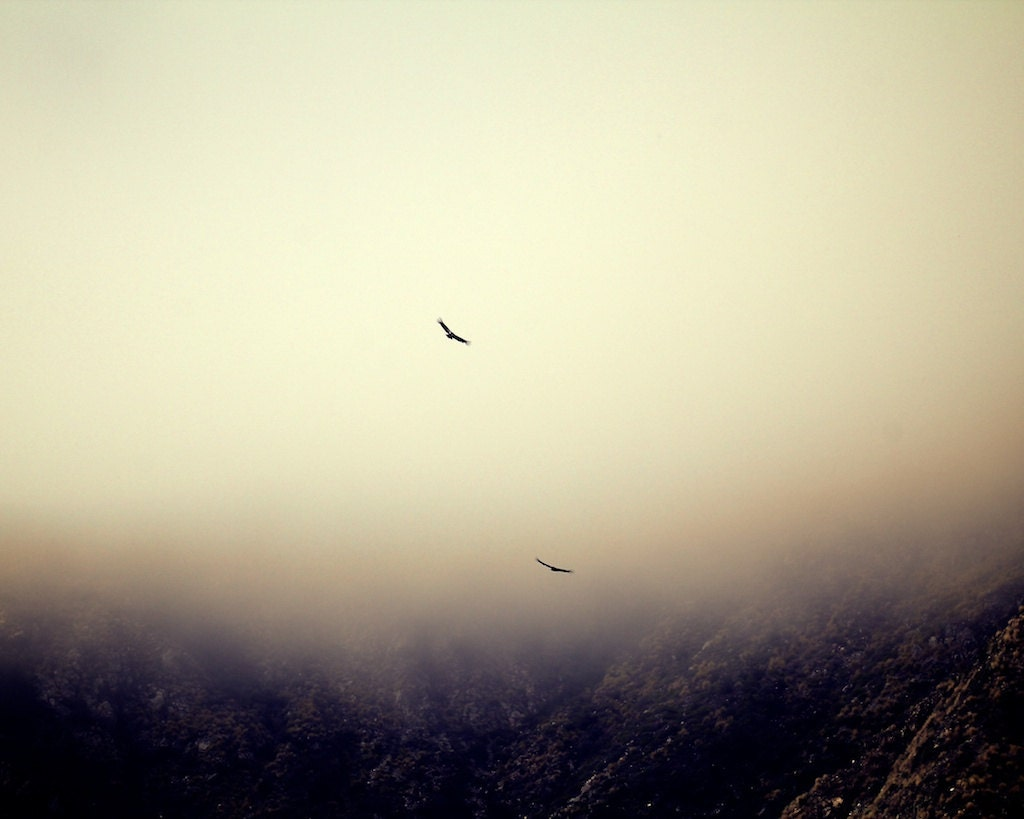 Two Hawks Take Flight Over Foggy Big Sur California Mountains - ByWayOfPhotography