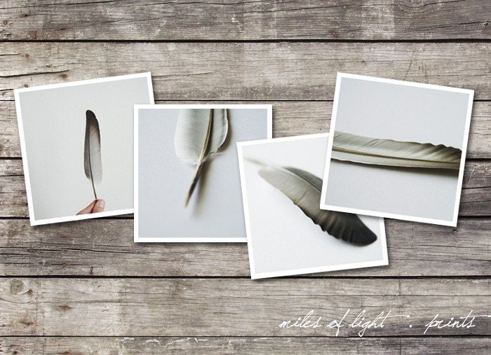 Feathers Set of 4 5x5 prints