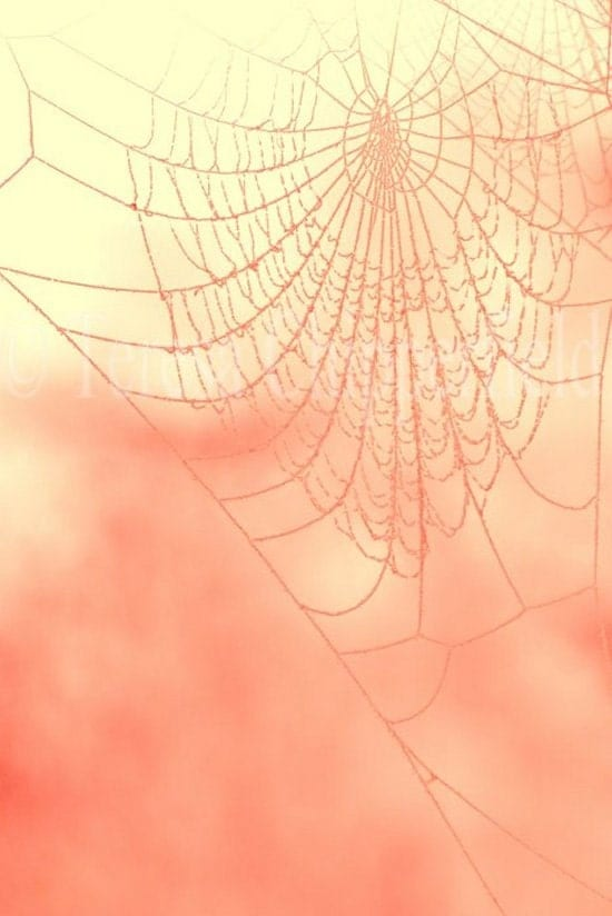 Ethereal Web - Mysterious Spider Web - 8 x 12 - Fine Art Photography - Haunting Bokeh Pink Glow Symmetrical Wall Art - Web Home Decor - PhotosByChipperfield