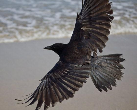 Cass Bird cassblackbird  Instagram photos and videos