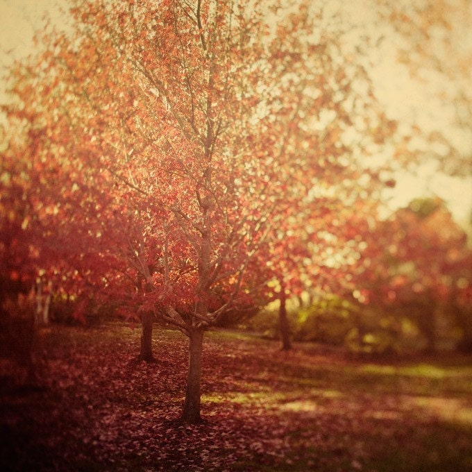 Everything is turning into beautiful - Fine art fall photograph