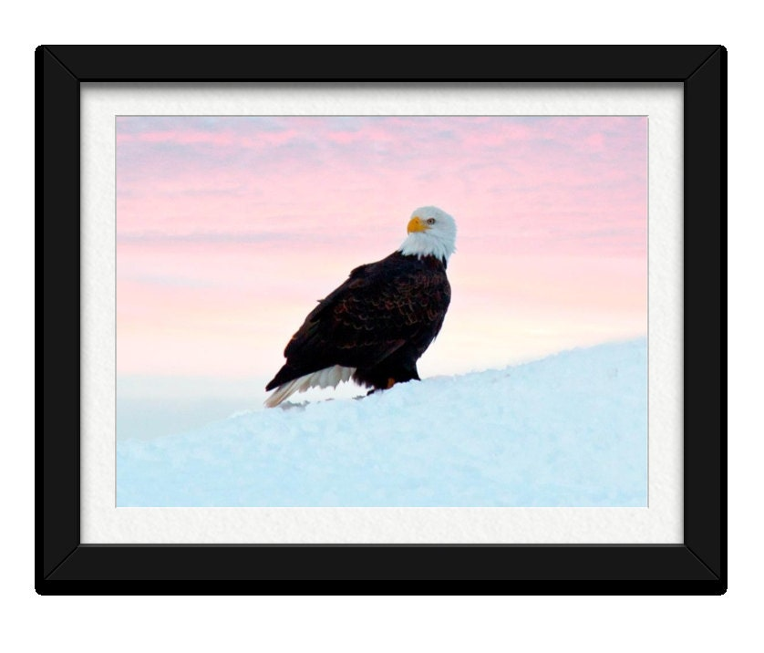 ON SALE Fine Art Photography,Wildife Nature Print,11X14 ,Winter Scenery,Bald Eagle