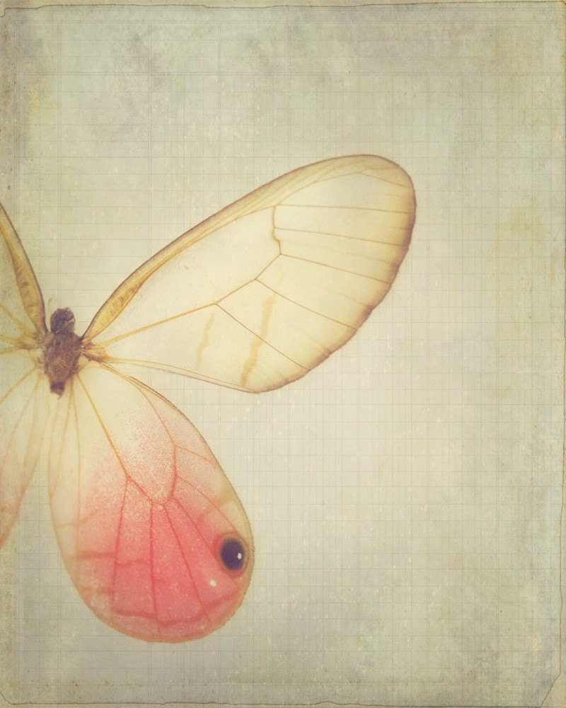 Wings - 8 x 10 Fine Art Photograph - dreamy pink vintage style butterfly home decor print - jessicatorres