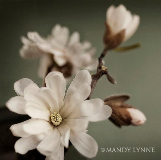 Awaken - MandyLynneDesign