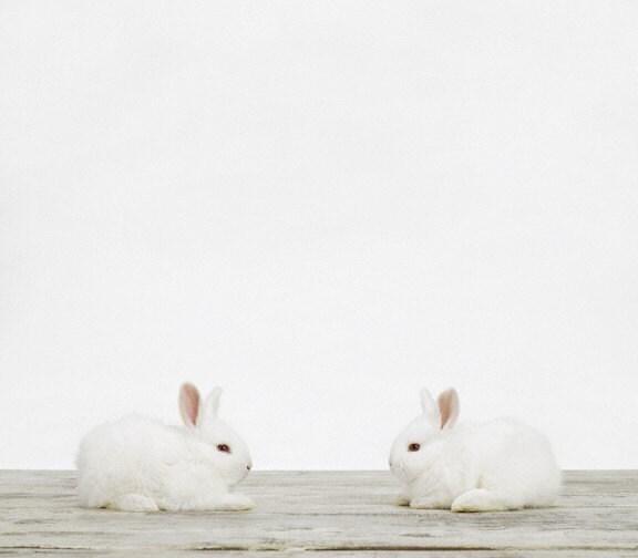 Baby Bunnies, 7 x 8 Fine Art Print