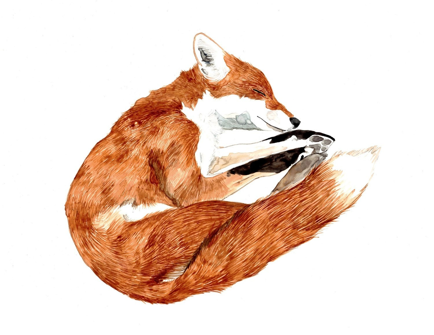 Sleeping Fox Archival Print