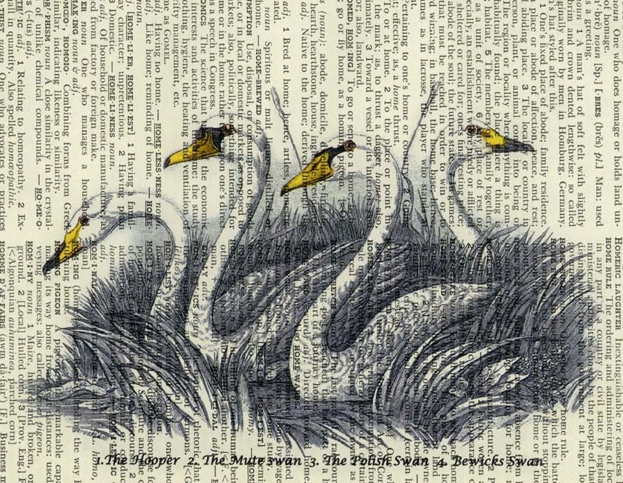 18oo's swan artwork - printed on page from vintage dictionary