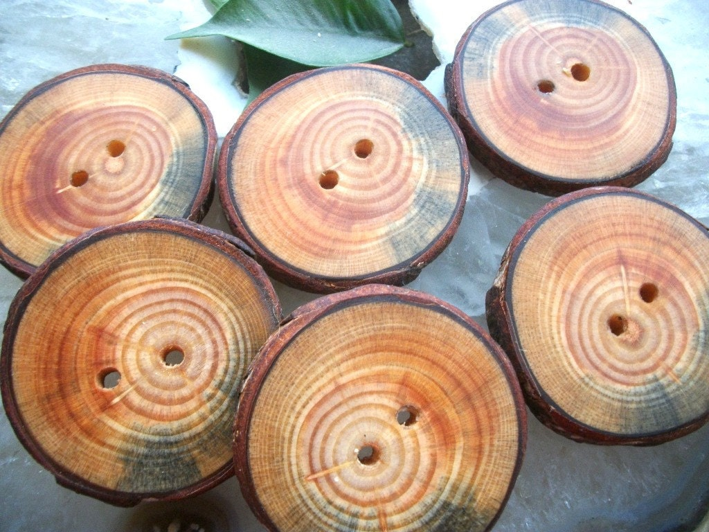 Beautiful Blue Spruce Wood Wooden Tree Branch Buttons... Lot of  6 ... 2 inch... 2 holes...OOAK for Fiber Projects