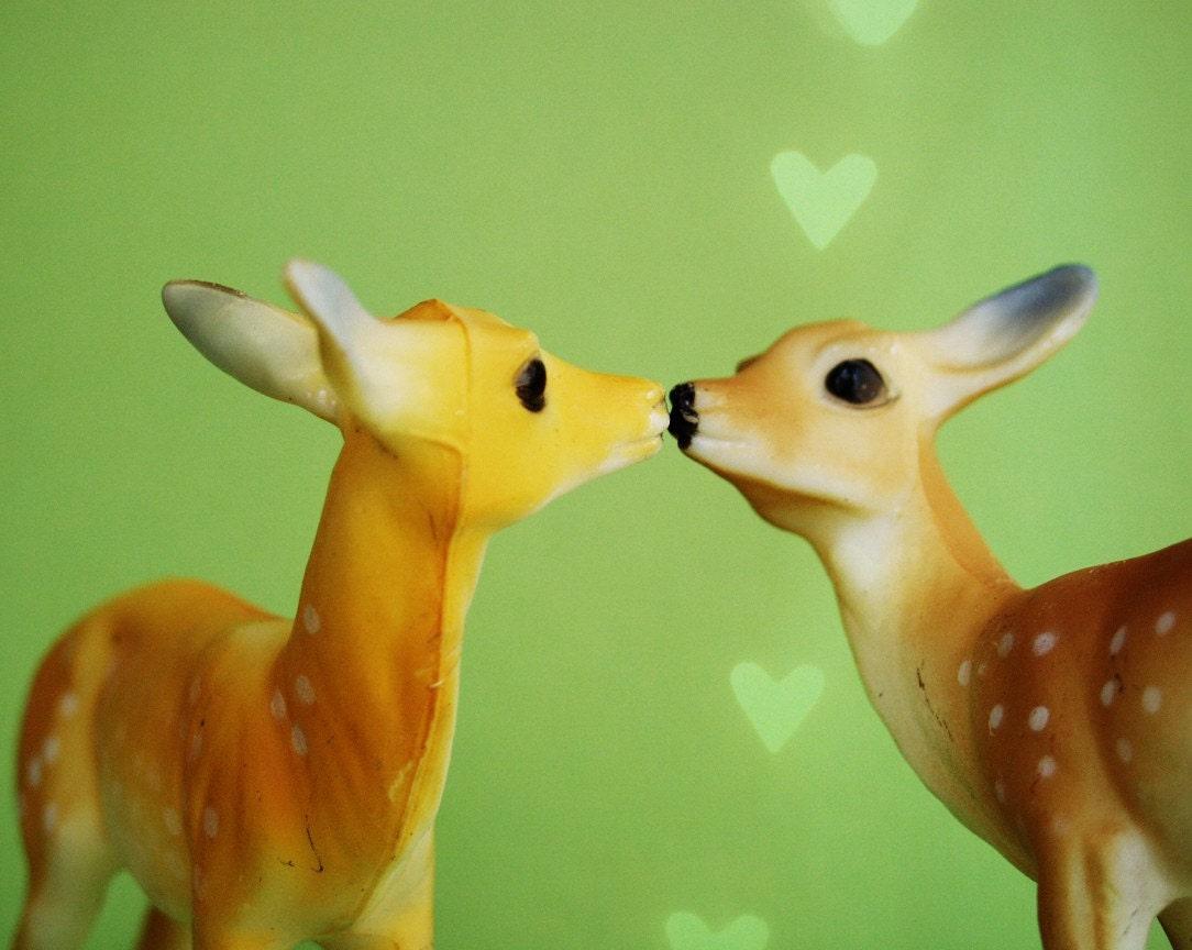 Kissing Deer Vintage Still Life Fine Art Print 8 X 10