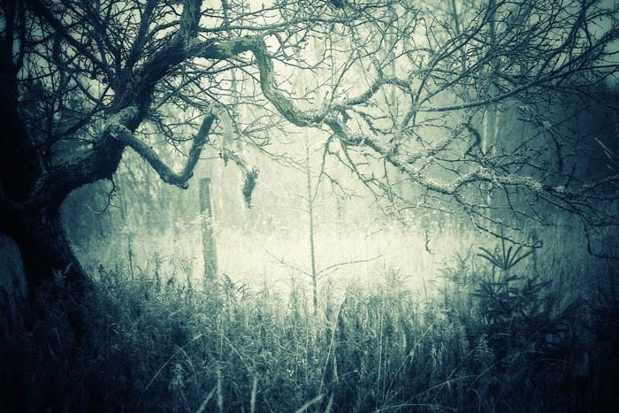 The Haunting Woods - 4x6 Fine Art Photograph