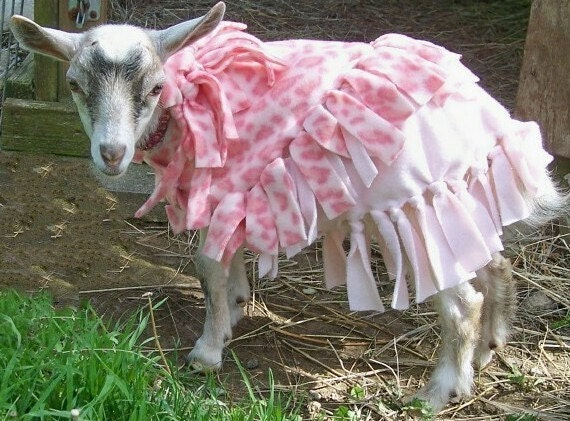 Yep  I make clothes for all types of Furbabies  PINK LEOPARD GOAT COAT